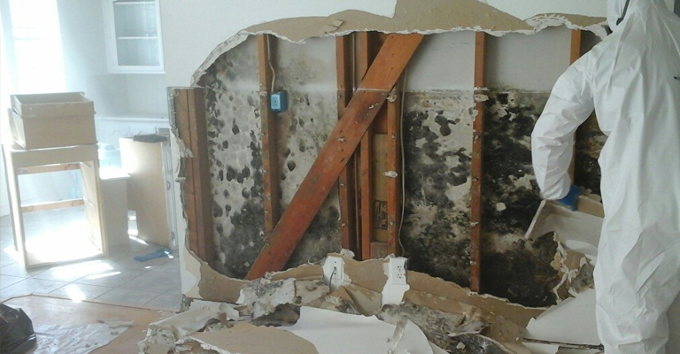 Mold Damage & Removal